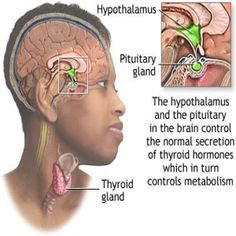 Natural Cure For Thyroid Problems