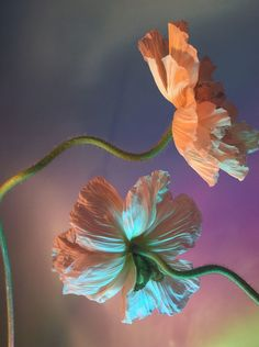 Flowers Photography and Magical Realism by Doan Ly Trendland Online Magazine Curating the Web since 2006 # Art Inspo, Kunst Inspo, Pixiv Fantasia, Still Life Photography, Magical Photography, Flower Photography, Better Photography, Underwater Photography, Abstract Photography