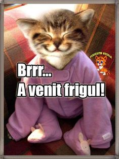 Cute Cats, Funny Cats, Animals And Pets, Haha, Alphabet, Funny Pictures, Jokes, Comics, Ideas
