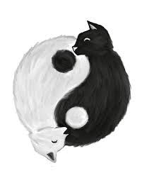 Image result for yin and yang animals
