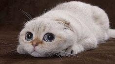 En Komik Kediler ► Çılgın Hayvan Videoları 2016 ► Hayvanlar Derleme !