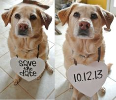 2 Pets Save the Date Engagement Heart Signs by yourethatgirldesigns
