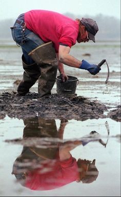 Clam Digging! Maine. Mud flats