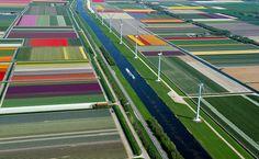 tulipas holanda - Pesquisa Google