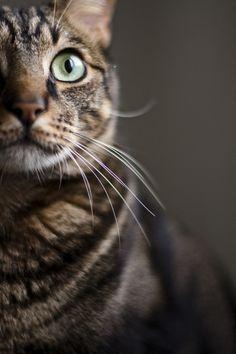 Cat ~ by Juan Luis Morilla