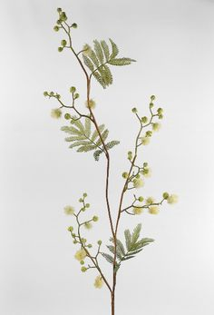 "40"" Green Mimosa Blossom Branch Artificial $8 each / 6 for $7 each"