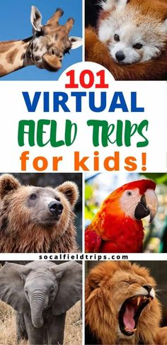 Virtual field trips bring text books to life! On a virtual field trip students can visit museums historical sites national monuments and other places of importance around the world from the comfort of their own home or regular classroom. Kids Learning Activities, Home Learning, Fun Learning, Toddler Activities, Weather Activities For Kids, Learning Shapes, Library Activities, Kindergarten Learning, Teaching Science