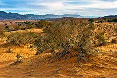 By Tomasz Dziubinski - Golden Desert, Rasmouka, Morocco