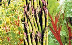 Oca, asparagus and rhubarb chard are all classic perennials