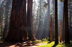 Výsledek obrázku pro národní park sequoia národní park