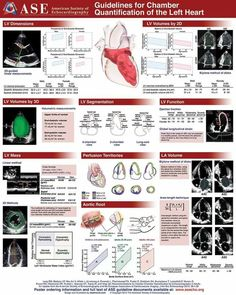 Cardiac Sonography, Ultrasound Sonography, Human Body Anatomy, Human Anatomy And Physiology, Female Reproductive System Anatomy, Acute Care Nurse Practitioner, Heart Circulation, Doctor Of Nursing Practice, Congenital Heart Defect