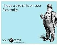 I hope a bird shits in your face today. #ecards #funny #shit lmao! This just made my day! Yes! More than once would be nice too!!!