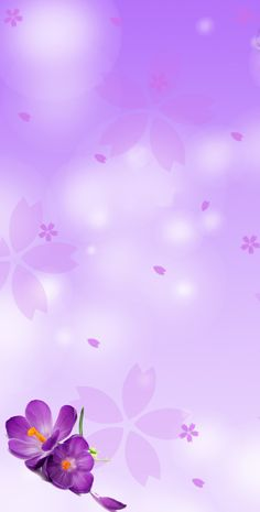 Lily Wallpaper, Wallpaper Nature Flowers, Flower Background Wallpaper, Beautiful Flowers Wallpapers, Flower Phone Wallpaper, Purple Wallpaper, Cellphone Wallpaper, Flower Backgrounds, Pretty Wallpapers