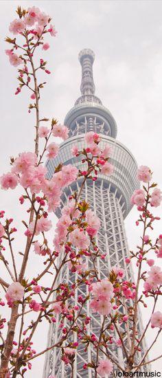 東京スカイツリーの辺りの春  今すぐ行きたい!!