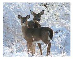 Oh, deer...