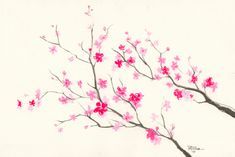 Turine Tran — another cherry blossom ink drawing - 20x30cm