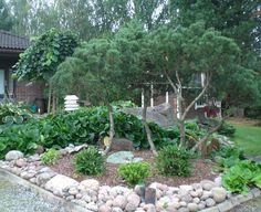 Mänty: Vuorimänty, , rhododendron, puksipuu