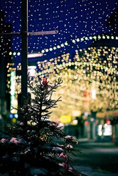 A Less Traditional Christmas Music Playlist (and New Year's Too)! Christmas Tree Sale, Little Christmas, Winter Christmas, Christmas Lights, Small Artificial Christmas Trees, Christmas Music Playlist, All Of The Lights, The Night Before Christmas, Holiday Time
