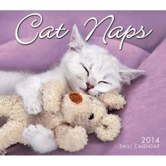Cat Naps 2013 Mini Wall Calendar: Our best-selling Cat Naps mini calendar has captured the hearts of cat lovers everywhere. Consumers can? Cat Calendar, Daily Calendar, Chat Web, Sleepy Cat, Cat People, My Buddy, Best Selling Books, Cat Naps, Dog Friends