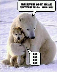 Of Bears and Wolves :P