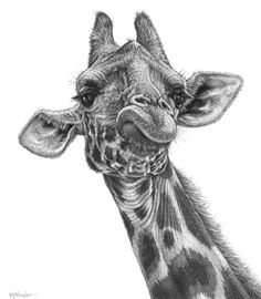 African Male Face Pencil Sketch | 42 INCREDIBLY REALISTIC AND ADORABLE PENCIL ILLUSTRATIONS OF ANIMALS
