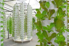 Soil-Free Growing Gains Ground in Pennsylvania... An aeroponic greenhouse is sort of like a high-rise for vegetable crops, and it could soon become an important way of producing high-value foods in unexpected places.