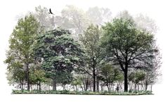 Landscape Architecture Drawing, Architecture Background, Landscape Background, Landscape Design, Coupes Architecture, Architecture Graphics, Architectural Trees, Architectural Section, Photoshop Rendering