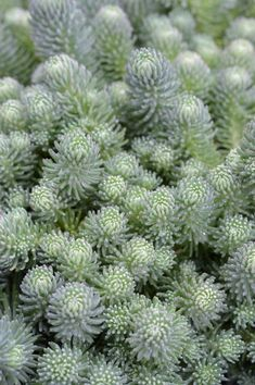 Hello Hello Plants, Dry Garden, Mini Farm, Low Maintenance Plants, Ornamental Plants, Types Of Plants, Garden Supplies, Fruit Trees, Shrubs