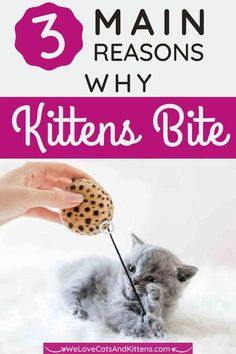 420 Cat Care Fun Ideas In 2021 Cat Care Cats Pets
