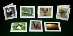 MARK CAUNT PHOTOGRAPHY - Greeting Cards