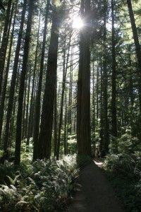 Silver Falls State Park, near Salem, Oregon