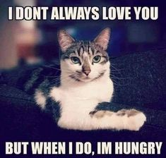 Funny Cat Jokes, Funny Animal Memes, Cute Funny Animals, Funny Animal Pictures, Cat Memes, Funny Dogs, Cute Cats, Animal Funnies, Hilarious