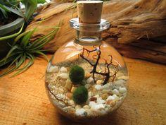 Marimo Bottle Garden. Underwater Terrarium with living japanese moss ball. $22.00, via Etsy.