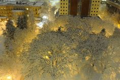 Thousands of Birds Photographed Atop Snow-Laden Trees in...