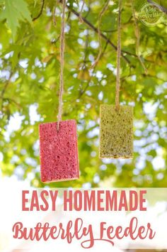 An Easy Homemade Butterfly Feeder which includes a butterfly food recipe! Butterfly Food, Butterfly Feeder, Butterfly House, Diy Bird Feeder, Humming Bird Feeders, Bird Suet, Diy Spring, Spring Time, Backyard Birds