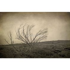 Trees Selection of 5 Blank photo cards, Black birds, Gothic, Crows,... ($18) ❤ liked on Polyvore featuring home, home decor and stationery