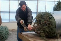 Getting a Christmas tree ready for delivery!
