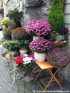 C & N Travel (2012): Clarens, Switzerland - Flowers and plants