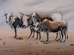 """Nguni Bulls"" Oils - Painted by Xan  Virgili. Original Sold. Orders and enquiries at xan.virgili88@gmail.com Framed Prints, Canvas Prints, Cows, Art Ideas, Art Gallery, Africa, Tapestry, Horses, Artwork"
