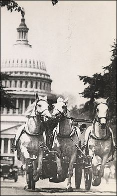 DC horse-drawn fire truck. Barney, Gene and Tom on a fire run (source: Washington Post).