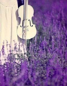 White violins and Lavender