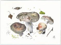 http://www.pelcor.com/mushrooms/PagesOriginals/Russula cyanoxantha Or.html