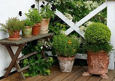 A cluster of different sized & shaped pots in terracotta all work well together in a micro garden space. | The Micro Gardener