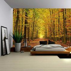 Amazon.com: Wall26® - A Small Pathway in a Tall Brich Tree Forest - Wall Mural, Removable Sticker, Home Decor - 66x96 inches: Home & Kitchen