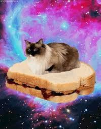 This is a picture of a himalayan cat floating on a peanut butter and jelly sandwich in front of a nebula in outer space.