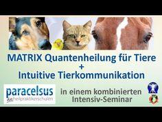 Verstehst du mich?   Der Weg zu deinem Tier: Grundlagen der Tierkommunikation (German Edition)