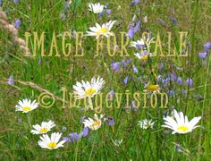 for sale finnish summer field flowers