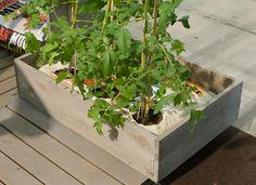 Aurinkoiselle ja lämpimälle parvekkeelle voi mainiosti perustaa pienen tomaattiviljelyksen. Viherpiha.fi