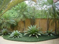 GILBERTO ELKIS PAISAGISMO  Giant Bromeliads underplanted with Mondo grass