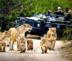 Searching for the Best African Safari Travel? Find a vast selection of tour operators. Comprehensive African Safari tours selection at best price. Parc National Kruger, Sand Game, South Africa Safari, Tree Camping, Game Reserve, African Safari, Africa Travel, Vacation Trips, National Parks